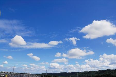 asian bunny: Cloud