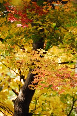 toge: Autumn leaves