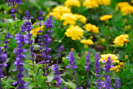 flower beds: Flower beds flower Stock Photo
