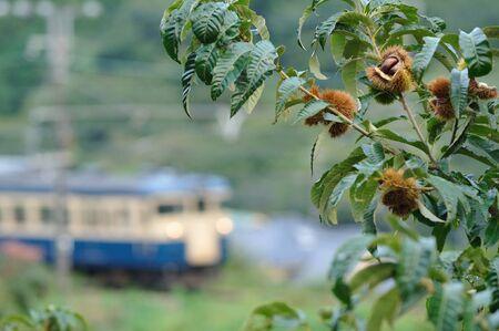 wood railroads: Chestnut and train Stock Photo