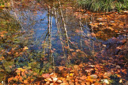 waterside: Waterside