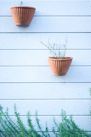 planter: White walls and planter