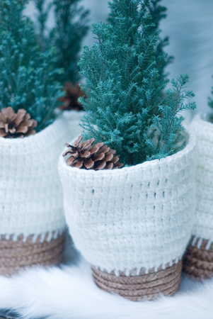 potted: Christmas potted