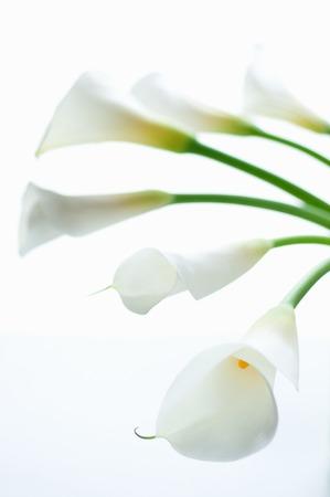 黄金の花瓶花瓶 写真素材