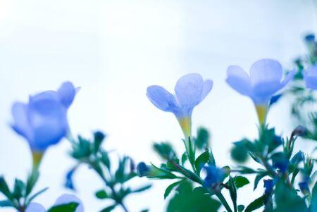 small flower: Blue small flower