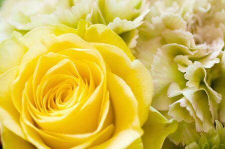 yellow roses: Rosas y claveles amarillos