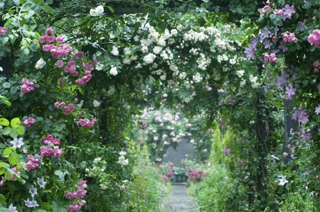 It rose arch