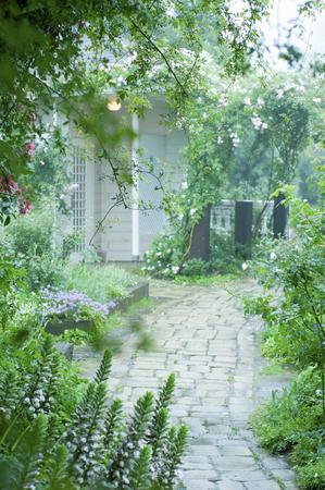 english garden: Rain of English Garden