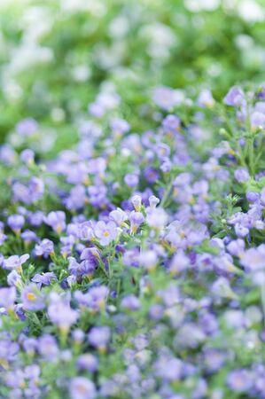 floret: Purple floret