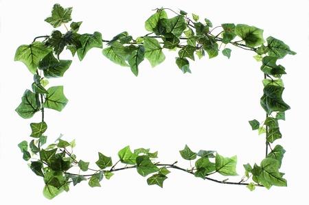 ivy: Ivy frame