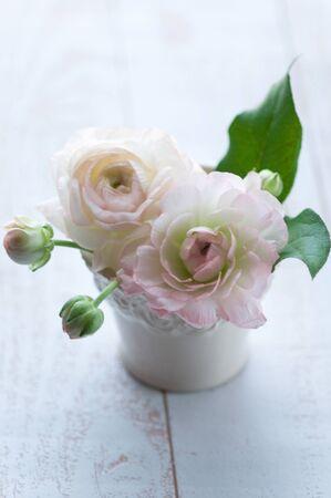ranunculus: Ranunculus Stock Photo