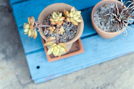 brainpan: Succulents