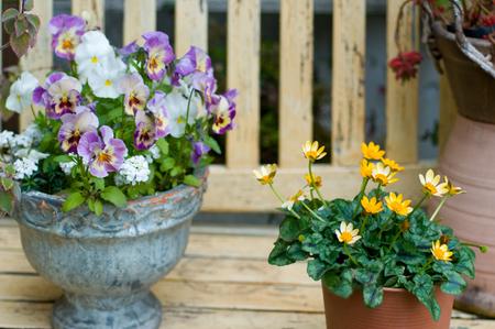 鉢花 写真素材