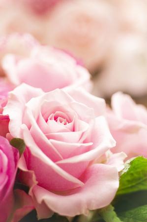 bouquet fleur: Bouquet de fleurs rose