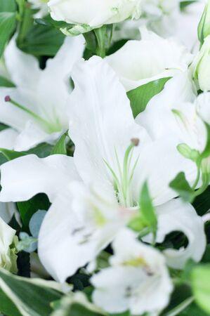 white lily: blanco lirio de cerca
