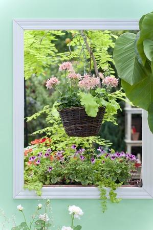 ウィンドウ フレームの鉢植え 写真素材
