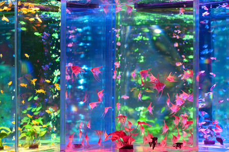 colourful lightings: Colorful tropical fish