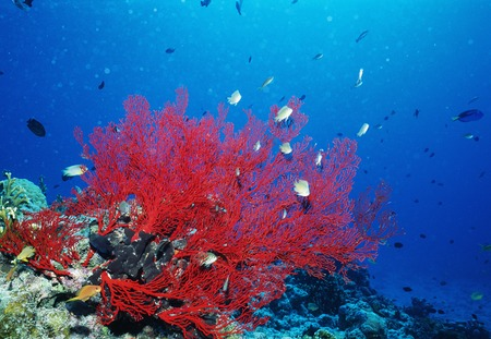 reef fish: Coral reef and fish Stock Photo