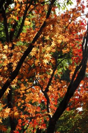 pleasent: Autumn leaves