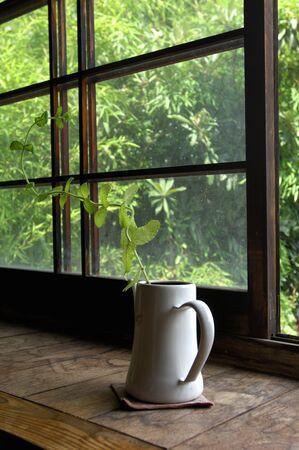 windowsill: Windowsill of houseplants