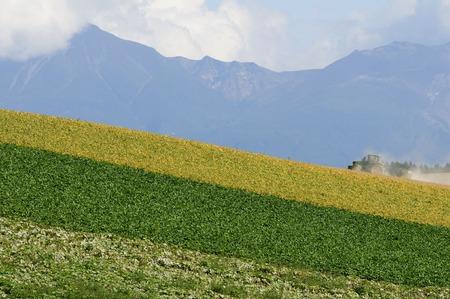 biei: Field of biei