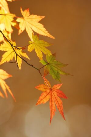 browned: Autumn leaves