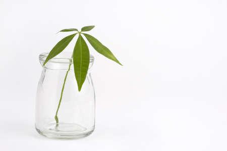 refers: Foliage plants