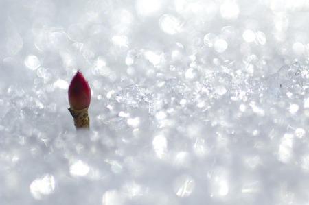 image: Snow image