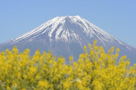 plateau of flowers: Fuji and Kikarashi Stock Photo