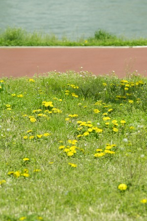 flower garden path: Promenade