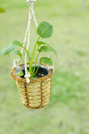 planter: Planter Stock Photo