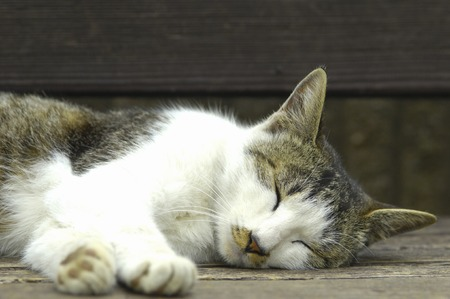 cat sleep 版權商用圖片