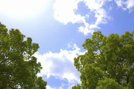 fleecy: Fresh green and white, fleecy clouds Stock Photo