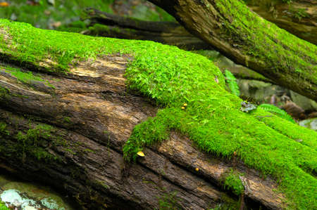 large tree: Large tree and moss