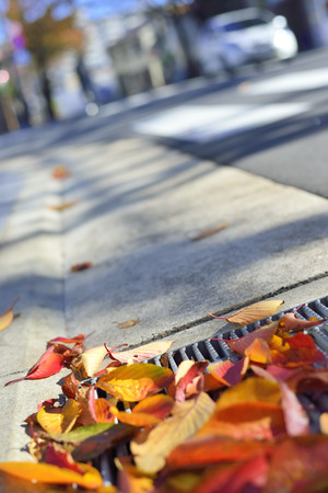 carriageway: Fallen leaves of the gutter Stock Photo