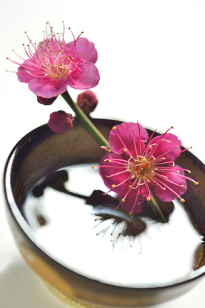 sake: Sake and plum