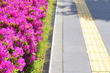 visually: Implantation of the sidewalk and azalea