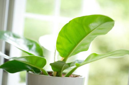windowsill: Windowsill of Green Stock Photo