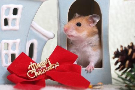Hamster. Imagens