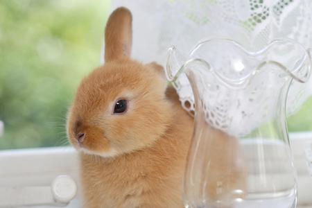 windowsill: Windowsill of rabbit and accessories Stock Photo