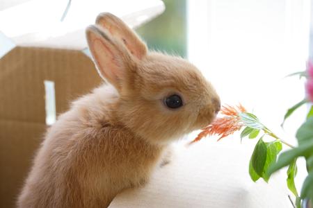 mammalian: Windowsill of rabbit and green