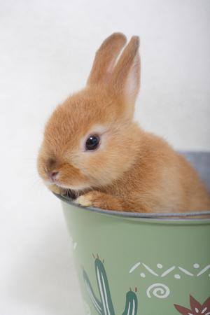Kaninchen Zubehör