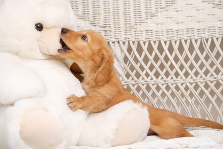 stuffed toys: Puppy and stuffed toys Stock Photo