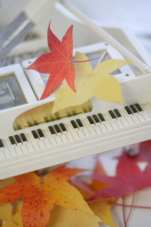 scaled down: Deciduous and piano