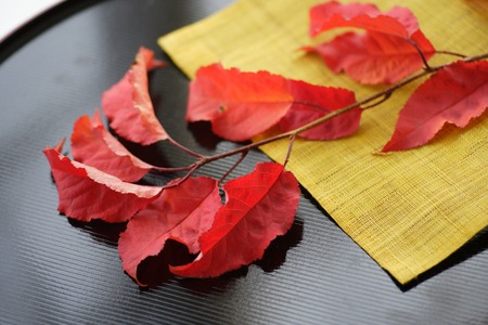mustard leaf: The fall of Japan