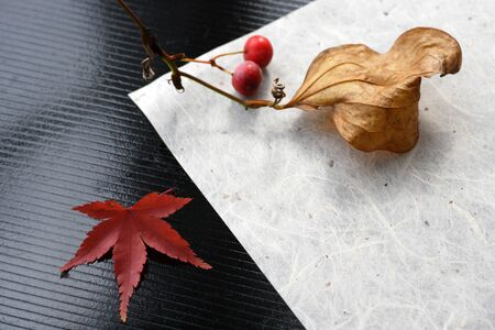 japanese maples: The fall of Japan