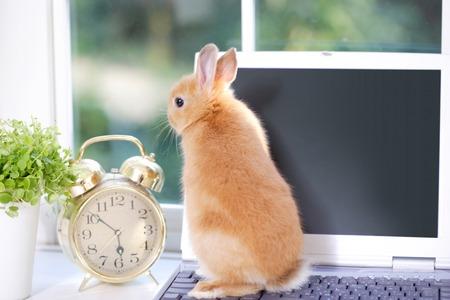 PC とウサギ 写真素材
