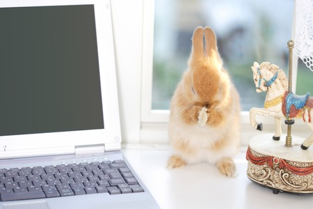 personal ornaments: PC and rabbit Stock Photo