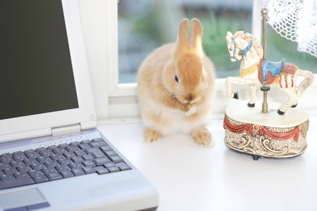 living organisms: PC and rabbit Stock Photo