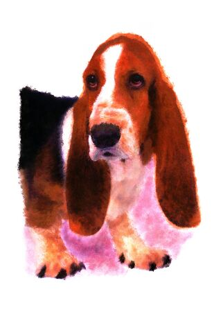 basset: Basset hound